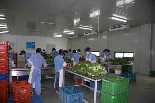 无锡有机蔬菜配送的运营模式注意事项