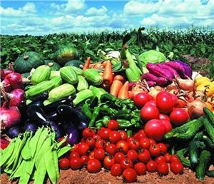 无锡蔬菜配送平台的配送模式有哪些要点